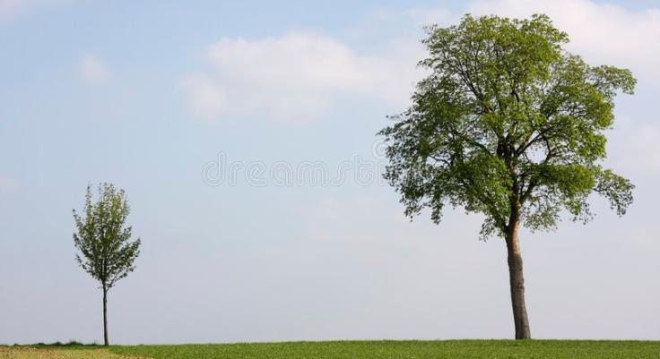 petit-et-grand-arbre-9111377
